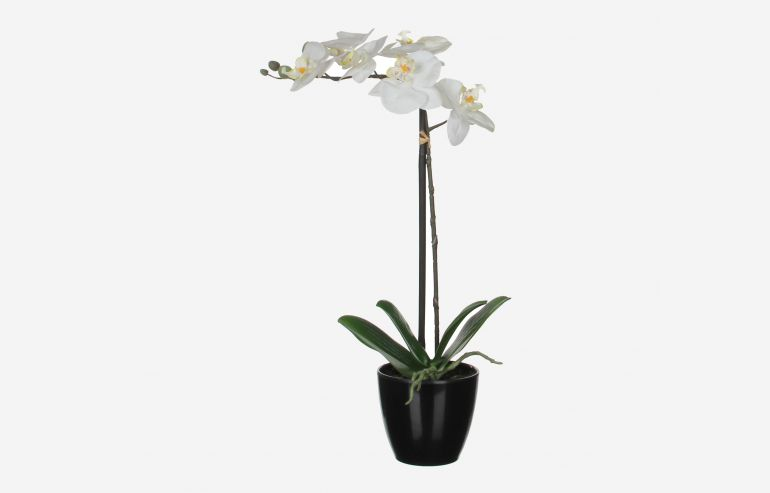 Flor con maceta Orquidea blanca
