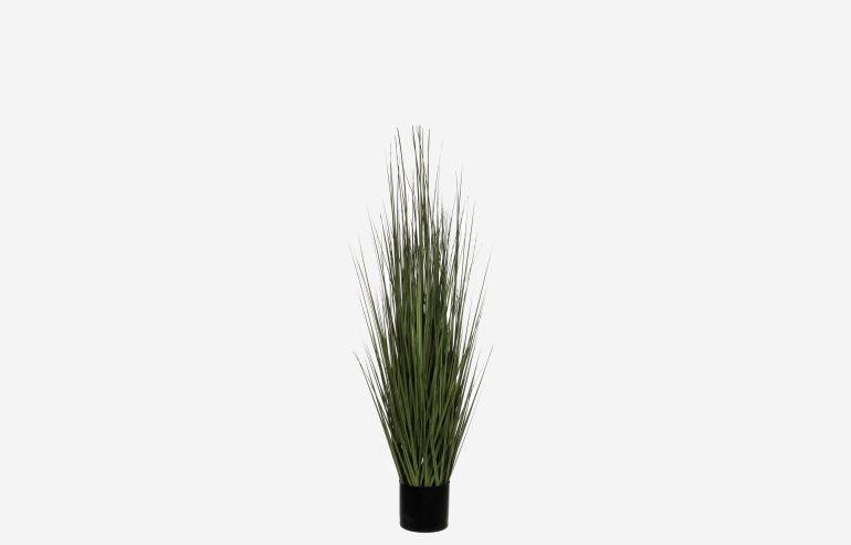 Maceta con hierba