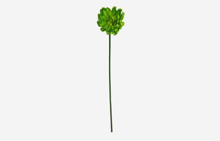 Flor Chrysanthemum verde