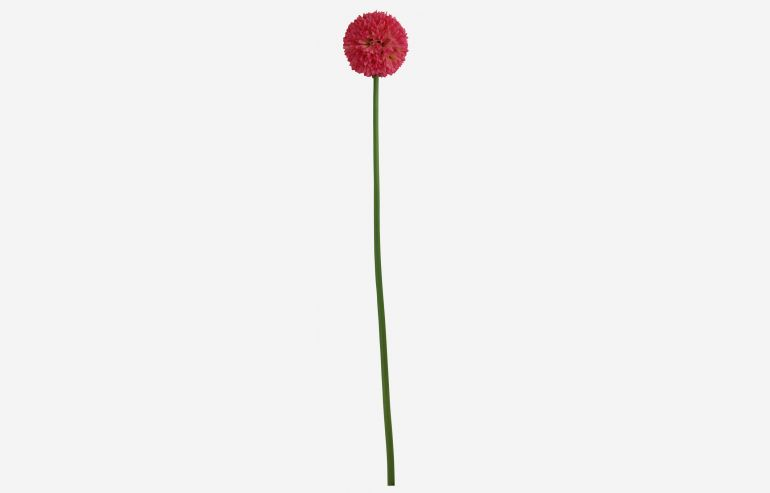 Flor Daisy ball rosa