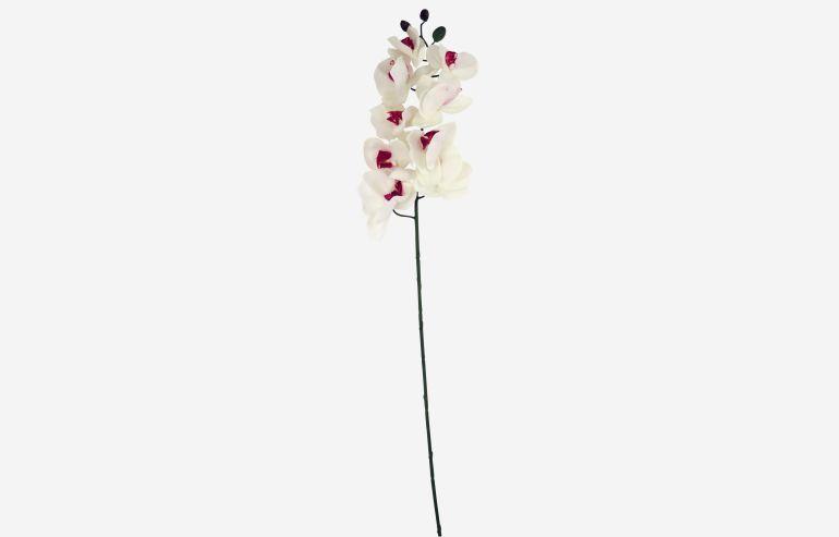 Flor Orchids blanco