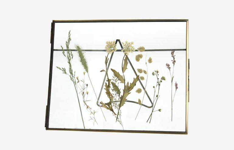 Marco Flores secas