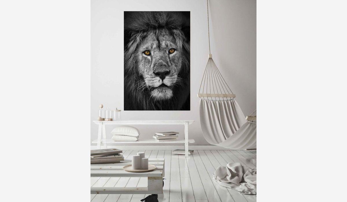 Cuadro cristal Amazing lion