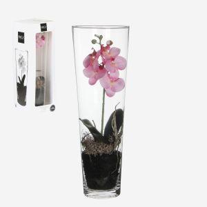 Jarrón + Orquidea Orchid rosa