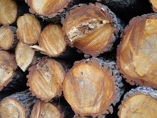 Madera de Castaño: durabilidad y calidez para tus muebles