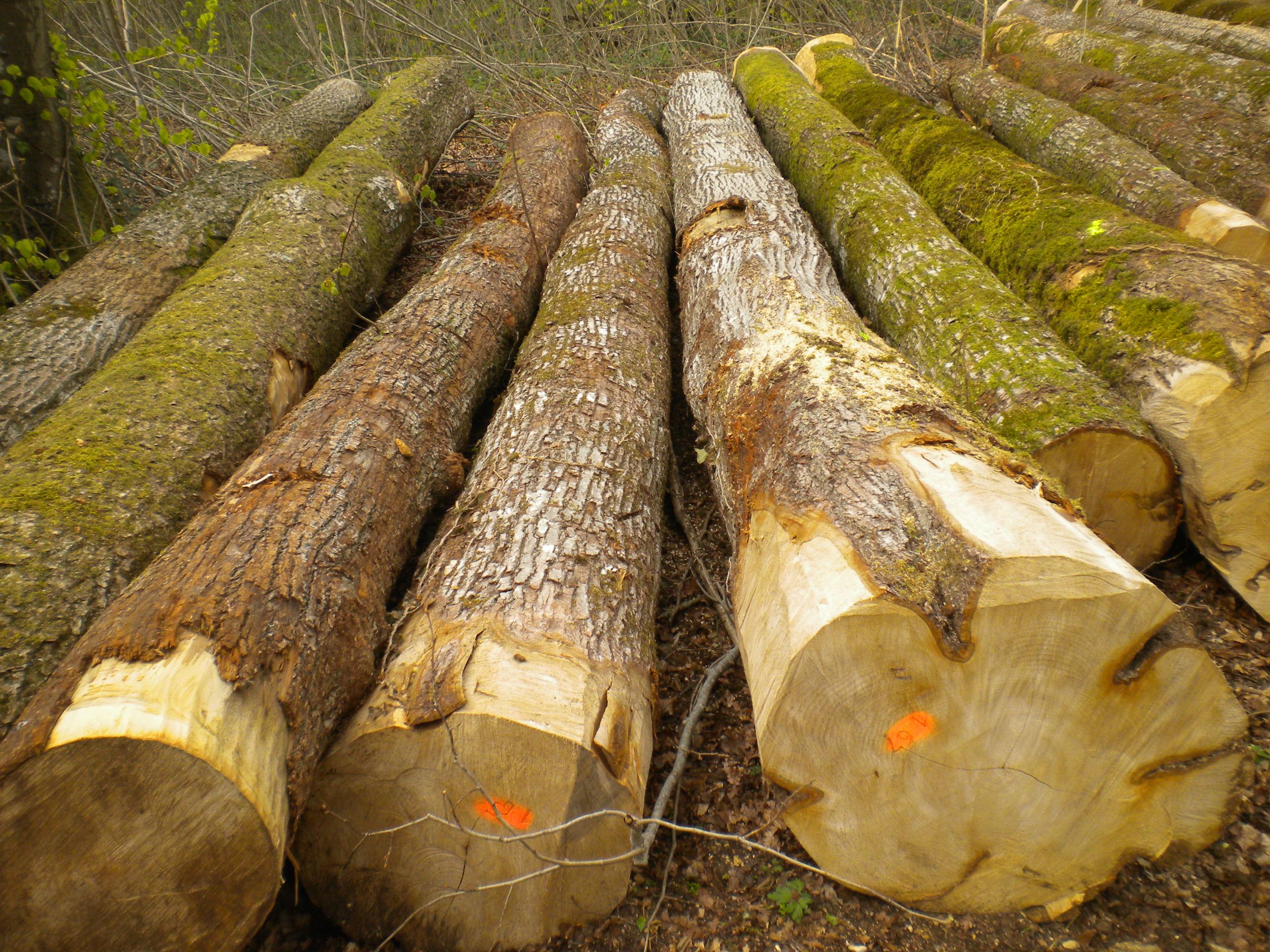 Los tipos de madera según su dureza