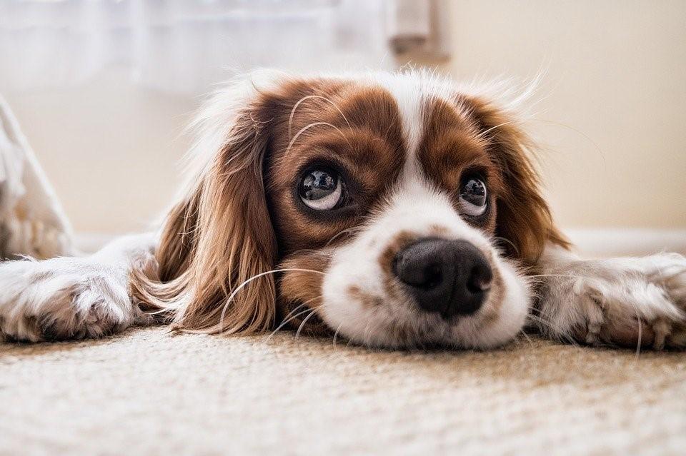 Las mascotas y los muebles, cuidado y recomendaciones